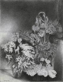 Yvon Pissarro - Mimosas