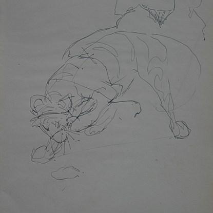 Study of Crouching Tiger - Orovida Pissarro (1893 - 1968)
