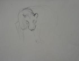 Orovida Pissarro - Study of Large Wild Cat Head