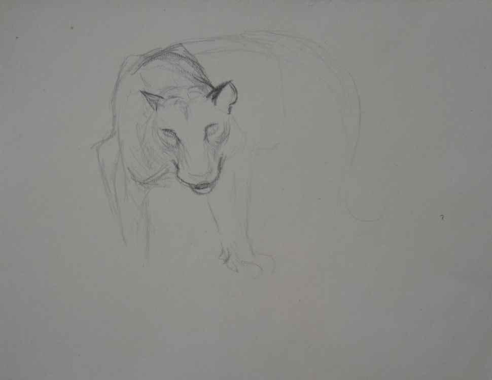 Study of Large Wild Cat Head - Orovida Pissarro (1893 - 1968)